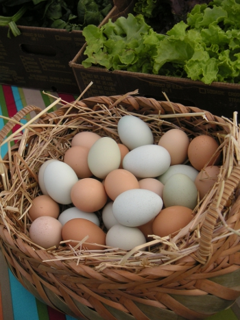 Locally grown, free range eggs!